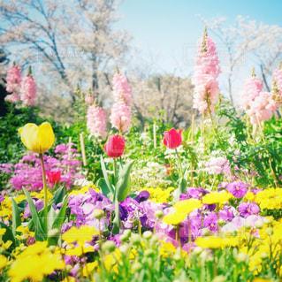 花の写真・画像素材[3048538]