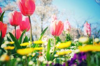 春の花の写真・画像素材[3050072]