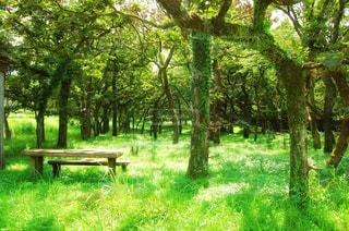 森の中のベンチの写真・画像素材[3139830]