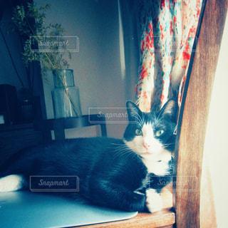 愛猫とまったりの写真・画像素材[3171204]
