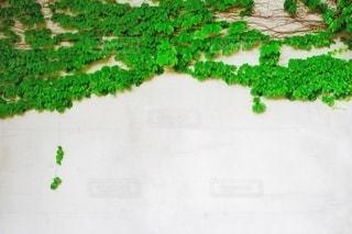 ツタのガーランドの写真・画像素材[3345789]