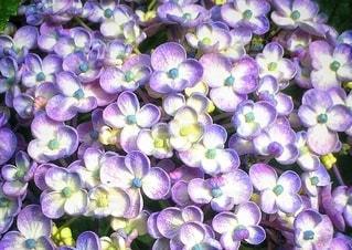 かわいい花びらの写真・画像素材[3374498]
