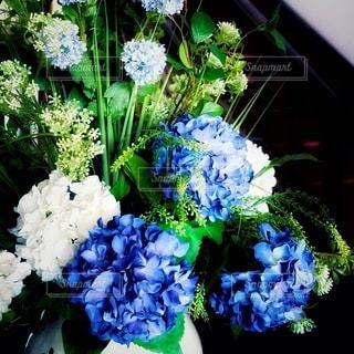 紫陽花の写真・画像素材[3375469]