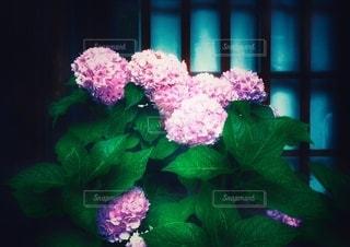 美しい佇まいの写真・画像素材[3375483]