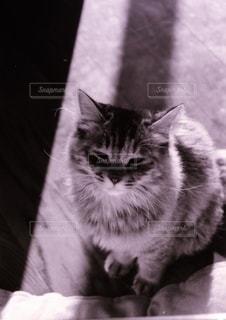 光と影と猫の写真・画像素材[3384752]