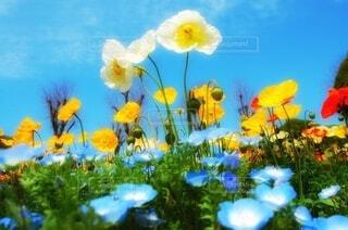 青空とお花畑の写真・画像素材[4136095]