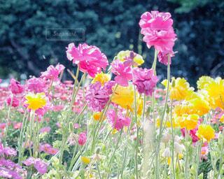花々の写真・画像素材[4354931]