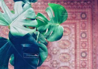 植物と赤い絨毯の写真・画像素材[4360333]