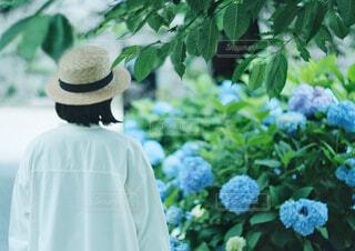 紫陽花と女性の写真・画像素材[4557937]