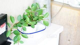 観葉植物の写真・画像素材[2925511]