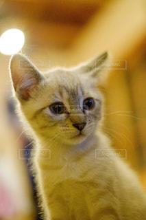 猫,動物,かわいい,ペット,子猫,人物,ネコ