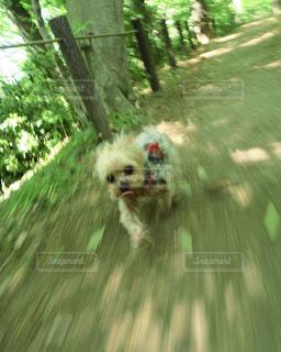 犬の写真・画像素材[463501]