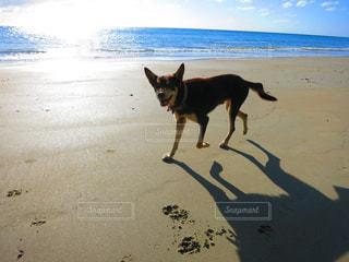 犬 - No.474294