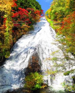 木々 に囲まれた滝の写真・画像素材[1608216]