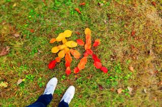 落ち葉で秋をの写真・画像素材[1642205]