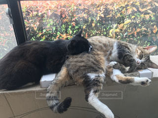 猫,動物,ペット,人物,黒猫,茶トラ,ネコ