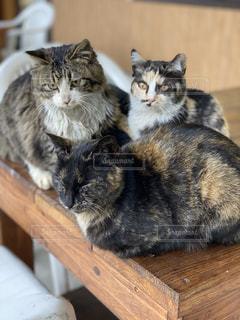 猫,動物,屋内,木,ペット,子猫,人物,座る,木目,キティ,ネコ,ネコ科の動物