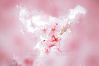 春の隙間の写真・画像素材[3003558]