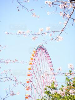 空,桜,屋外,観覧車,樹木