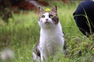 アホ猫の写真・画像素材[3396181]