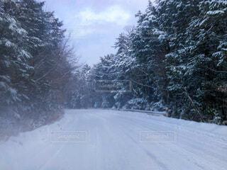 雪の中を走行中の写真・画像素材[4146222]