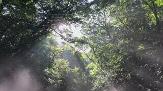 自然,風景,空,夏,森林,屋外,朝日,森,霧,景色,デートスポット,夜明け,爽やか,清々しい,樹木,パワースポット,神秘的,光芒,マイナスイオン,早朝,軽井沢,さわやか,長野県,観光スポット,白糸の滝,草木,8月,イメージ