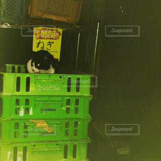 猫,動物,ペット,人物,八百屋,ネギ,ネコ,ねぎ