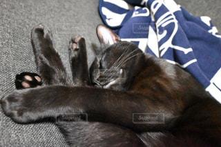 猫,動物,ペット,人物,お昼寝,黒猫,クロネコ,眠る猫,癒される,無邪気,ネコ