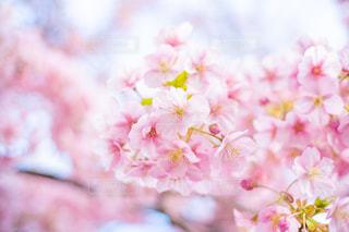 春の訪れの写真・画像素材[3002158]