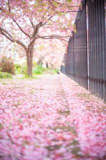 春の道の写真・画像素材[3035737]