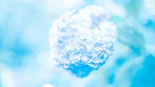 綿菓子のようなの写真・画像素材[3440436]