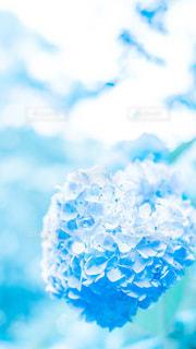 青にとけるの写真・画像素材[3440482]