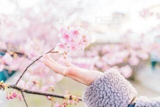桜の写真・画像素材[4211494]