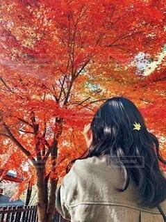 紅葉に見惚れる後ろ姿に見惚れるの写真・画像素材[3927104]