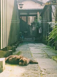1人,猫,動物,庭,屋外,緑,昼寝,家,ペット,人物,ドア,野良猫,地面,1匹,日向ぼっこ,草木,ネコ,長崎猫,長崎ネコ,ロング猫