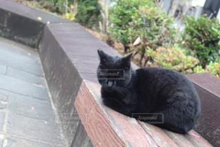 猫,動物,黒,ベンチ,ペット,人物,ネコ