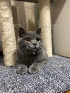 猫,動物,ペット,人物,ネコ