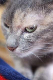 猫のクローズアップの写真・画像素材[2978622]