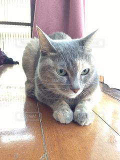 座り猫の写真・画像素材[2978626]