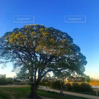 木のクローズアップの写真・画像素材[2997694]