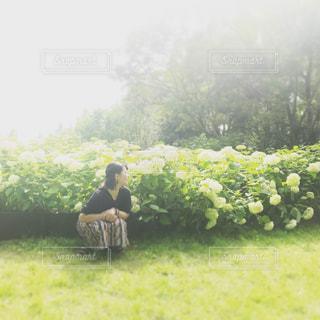 紫陽花の写真・画像素材[2997696]