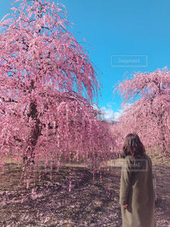 木の前に立っている人の写真・画像素材[3016051]