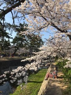 女性,1人,公園,花,春,桜,屋外,川,景色,草,樹木,川岸,cherry blossom,草木,桜の花,さくら,ブロッサム