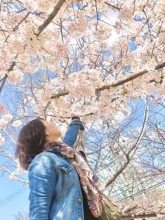 女性,1人,風景,花,春,屋外,白,青空,少女,樹木,人,Gジャン,さくら,ブロッサム,届け
