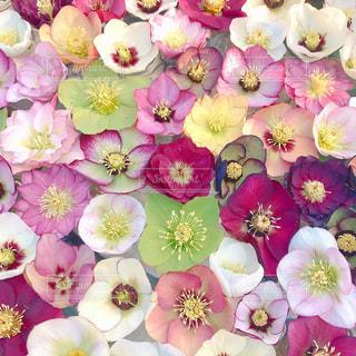 花の詰め合わせの写真・画像素材[3126739]