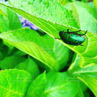 緑のクローズアップの写真・画像素材[3140746]