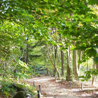森の中の木の写真・画像素材[3140771]