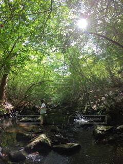 川の中の写真・画像素材[4096662]