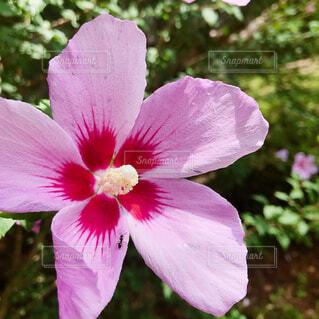 pinkの写真・画像素材[4317462]