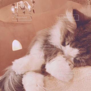友だち,猫,動物,かわいい,ペット,人物,癒し,cat,猫カフェ,ネコ